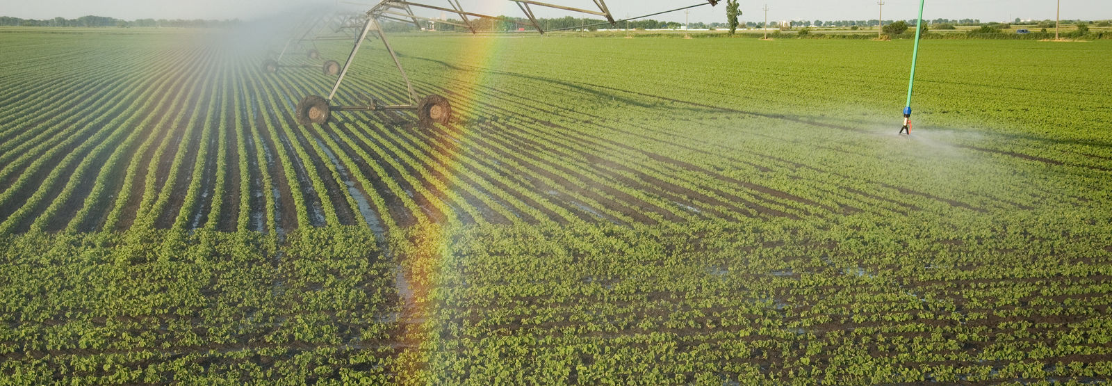 rainbow appears in mist while field of crops get sprayed